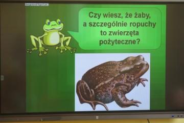 Dzień żaby
