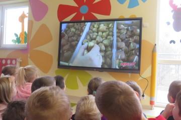 Cebule i cebulki – sadzenie szczypioru, żonkili,