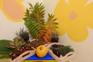 Jesień - tworzenie kącika przyrodnicznego