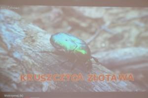 Groźni mieszkańcy polskich lasów -  poznanie zwierząt zamieszkujących lasy